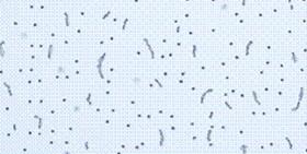 Fibra Mineral CONCORDE
